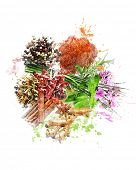 Watercolor Digital Painting Of  Spices And Herbs