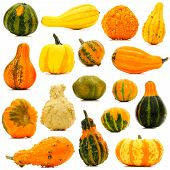 Autumn gourds isolated