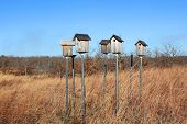 Bird houses on tall metal poll
