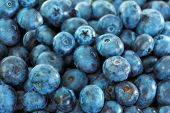 Blueberries close-up