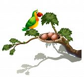 Illustration of a parrot and a nest on a white background