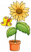 Illustration of a sunflower and a butterfly on a white background
