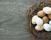 Birds Eggs In Nest On Wooden Background