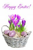 Beautifil Spring Flowers Crocus With Easter Eggs Decoration