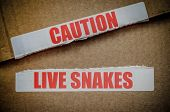 Caution Live Snakes