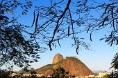Mountain Sugarloaf In Frame Of Leaves With Moon, Rio De Janeiro