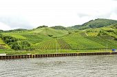 pic of moselle  - waterfront of Moselle river and vineyards on green hills Germany - JPG