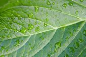 Macro of green leaf with water drops