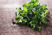 Fresh Green Leaves Of Mint