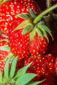 Summer Ripe Juicy Red Strawberry Close-up