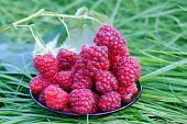 Choice Profiled Raspberry