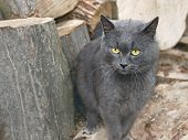 Gray Cat Near The Wooden Logs