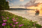 Beautiful beach with colorful flowers and boat
