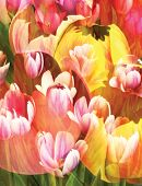 Abstract Colors Of Spring