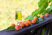 foto of apricot  - Sweet wine and ripe apricots in garden - JPG