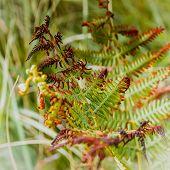 stock photo of fern  - Detail of leaves of fern half wilted - JPG