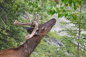 stock photo of deer head  - head of brown male white - JPG