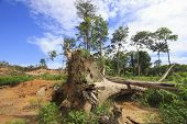 stock photo of rainforest  - Deforestation environmental destruction of rainforest  - JPG