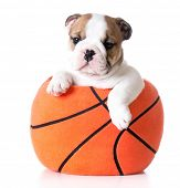 picture of stuffed animals  - sports hound  - JPG
