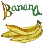 picture of bunch bananas  - Watercolor illustration on a white background a bunch of bananas and an inscription - JPG