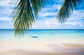 Beach Under Palms