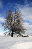 Snowy Prairie Scene