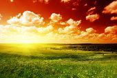 zomer gebied van gras en zonsondergang