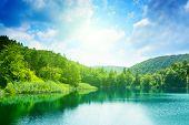 Постер, плакат: зеленые воды озера в лесу