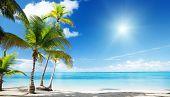 Karibisches Meer und Kokospalmen