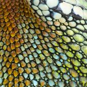 colorful reptile skin
