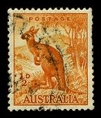 Austrália-CIRCA 1937:A carimbo imprimido na Austrália mostra imagem de Macropus é um género de marsupial que