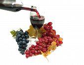 Frucht des Weinstocks