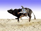 picture of bull riding  - A bull rider about to hit the dust - JPG