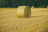 Hay Bale Dry On Field, Agriculture. Fodder, Forage, Haymaking. Agriculture, Farming, Ecology. Harves poster
