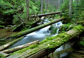 creek in the national park Sumava-Czech Republic