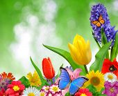 Floral Background with Schmetterling