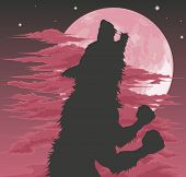 stock photo of wolfman  - A frightening werewolf silhouette howling at the moon - JPG