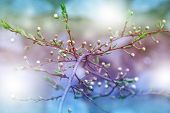 Spring Nature Art Background With Blossom. Beautiful Nature Scene With Blooming Tree. Branch With Fr poster