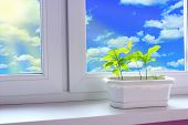 Young Plants Of Oaks On Window-sill Of Balcony And View To Cloudy Sky. Young Trees Are Ready To Plan poster
