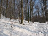 A Path In The Forest, A Mountain Path, A Winter Day In The Mountains, A Winter In The Carpathians, A poster