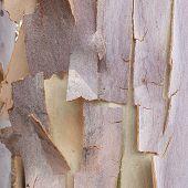 Macro tree bark textures, Australian tree bark close up poster