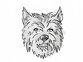 Retro Cartoon Style Drawing Of Head Of A Cairn Terrier, A Domestic Dog Or Canine Breed On Isolated W poster