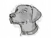 Retro Cartoon Style Drawing Of Head Of A Chesapeake Bay Retriever, A Domestic Dog Or Canine Breed On poster