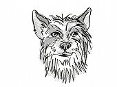 Retro Cartoon Style Drawing Of Head Of A Chinese Crested, A Domestic Dog Or Canine Breed On Isolated poster
