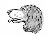 Retro Cartoon Style Drawing Of Head Of A French Spaniel, A Domestic Dog Or Canine Breed On Isolated  poster