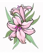 Two Lilies Illustration