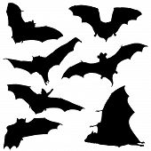 Bat Black Silhouette Illustration