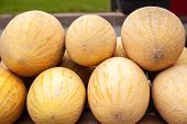 Fresh Yellow Melon. Many Melons In The Farmers Market. Close-up Many Melons. Summer Tray Market Agri poster