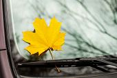 Yellow Maple Leaf On A Car Glass. Fell Yellow Maple Leaf On Car Glass As A Symbol Of Autumn. Maple L poster