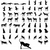 High resolution conceptual set,group or collection of black dog silhouette isolated on white background,for animal,domestic,mammal,canine,drawing,cute,playful,hound,play,sketch,humor or breed design